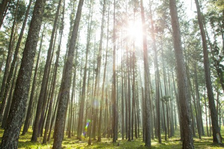 Why Marketing Driven Growth delivers Sustainability